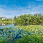 Carisbrooke's pond