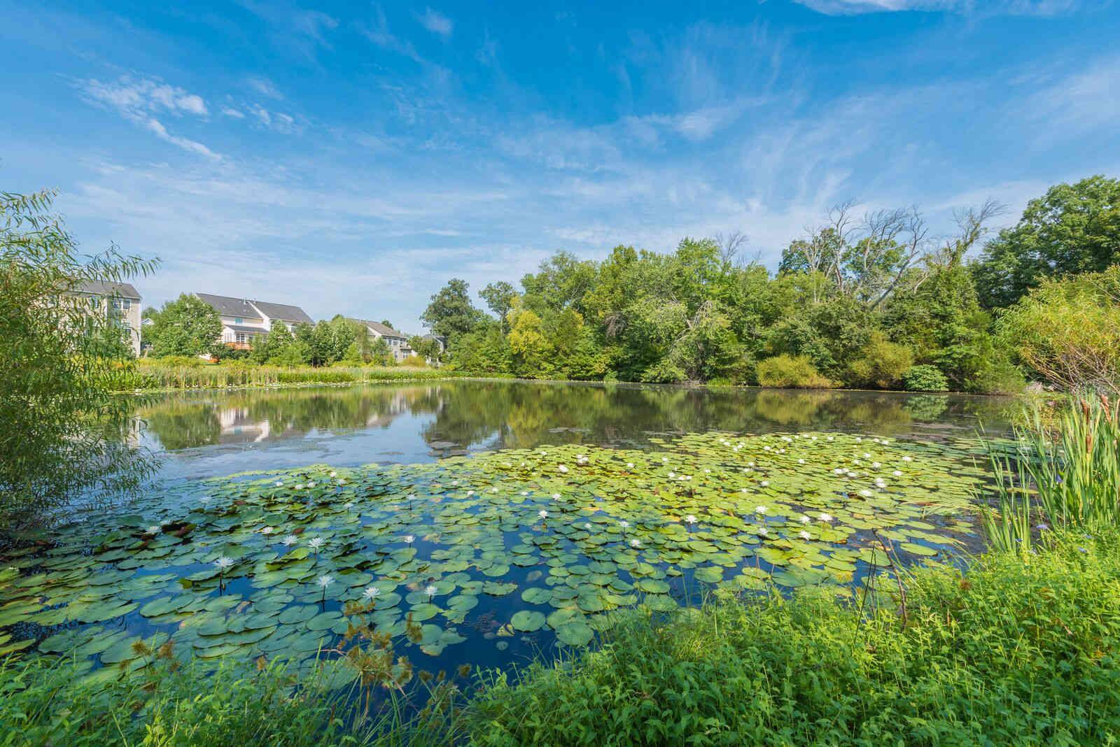 Beautiful natural pond at Carisbrooke HOA