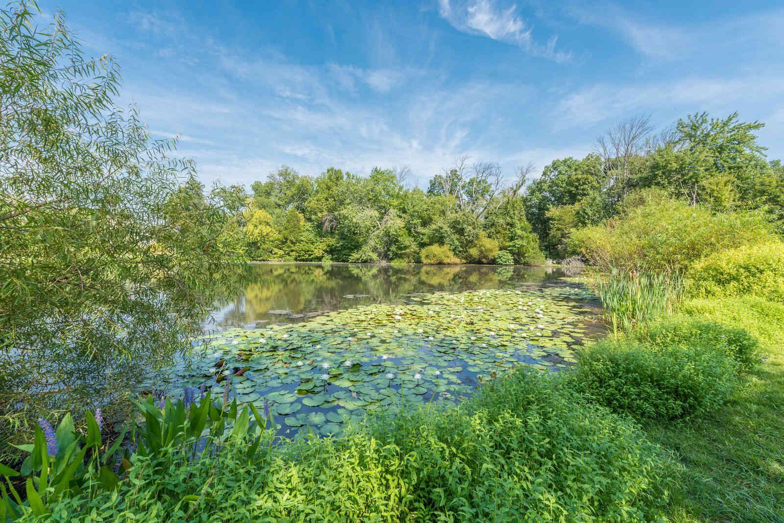Enjoy the natural common areas at Carisbrooke HOA