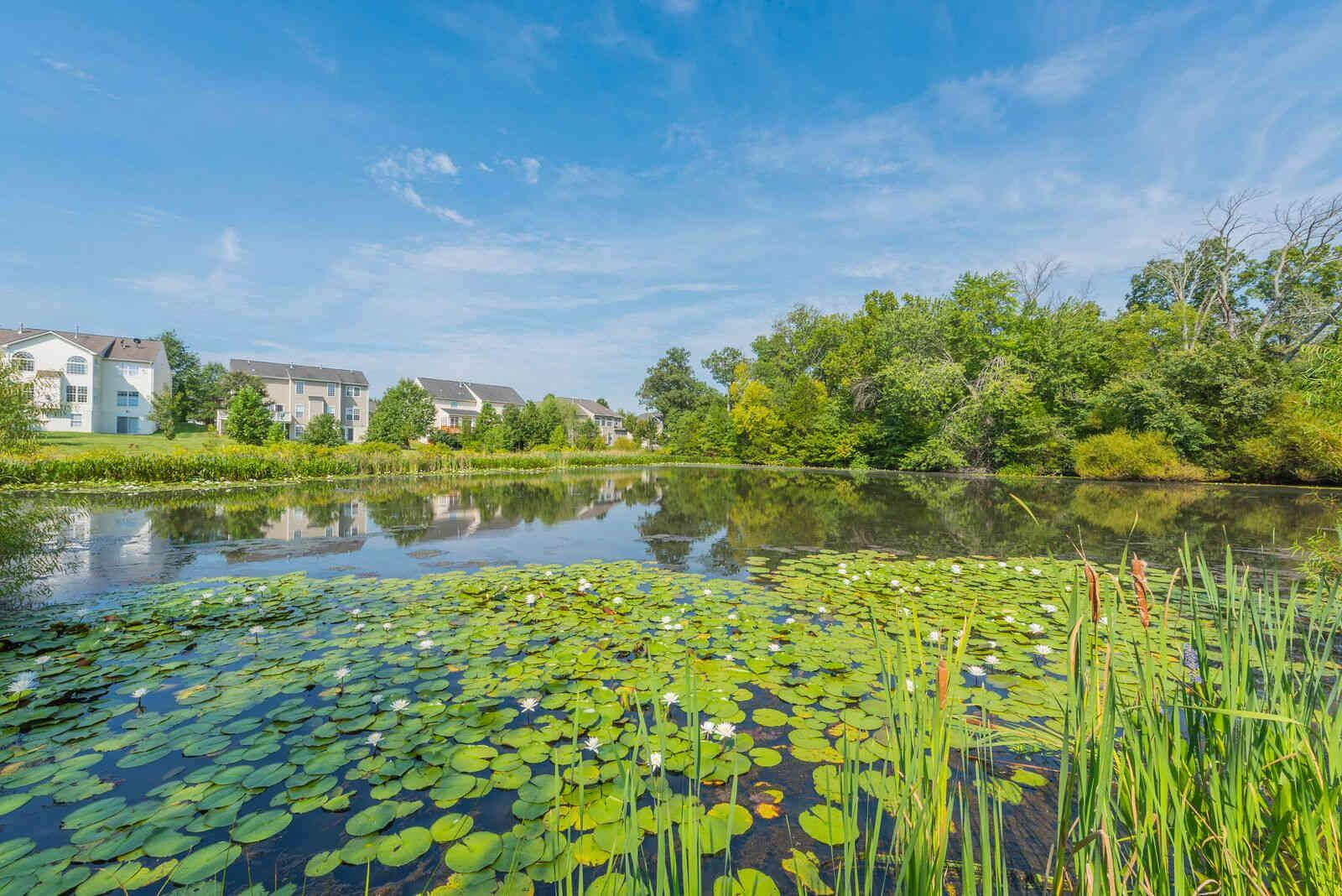 The Pond at Carisbrooke HOA